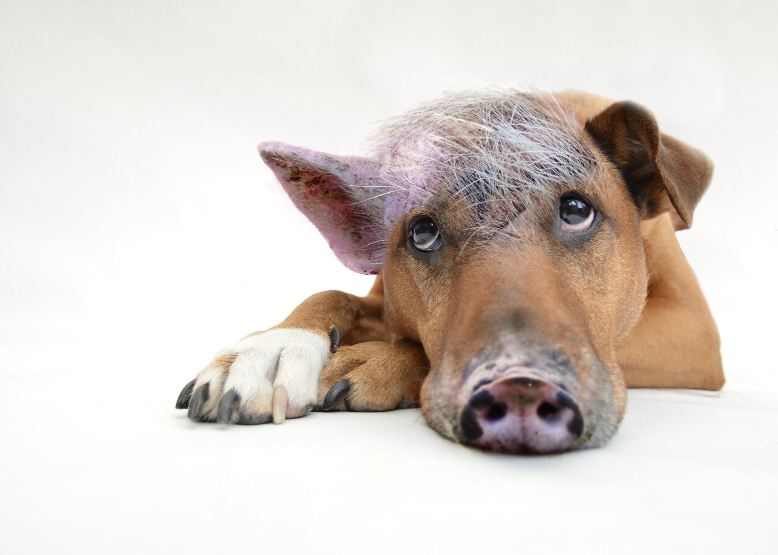 Schweinehund pixabay